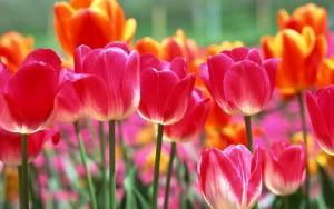 sejour printemps