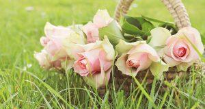 Panier de roses dans un champ pour la fête des mères