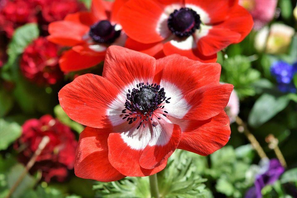 Fleurs Journées des Plantes d'Albertas 2018