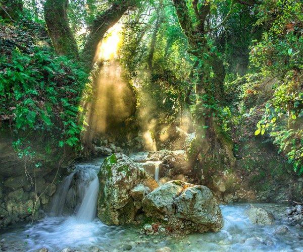 rainforest-3119822_640
